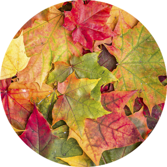 ekor-autumn-circle-feature